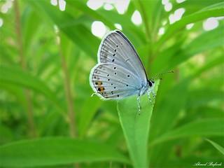 Butterfly 1323