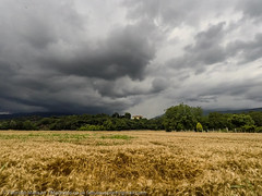 Threatening Sky Over Wheat Fields (Fabrizio Malisan Photography @fabulouSport) Tags: canavese fmphotoscouk fabriziomalisanphotography sky clouds wheat field fields wheatfields landscape nature weather june summer scenic atmospheric meteo crop agriculture campi grano campo campodigrano campidigrano natura naturaleza paesaggi paesaggio cascinettedivrea piemonte piedmont turin torino italy italie italien scenery cielo nuvole nuvoloso tempo temporale cielominaccioso tempesta storm stormy art artistic