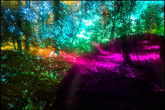 20170605-061 (sulamith.sallmann) Tags: landschaft natur blur bunt bäume colorful effect effekt filter folientechnik forest landscape nature trees unscharf wald brandenburg deutschland deu sulamithsallmann