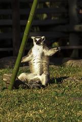 (nicolasfila) Tags: temaiken animals canon