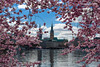 20170403-DSC_9503 (compidoc) Tags: bluete blumenpflanzen hamburg kirschbluete plantenunblomen tiere tulpe vogel zustand