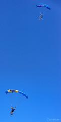 DSC_3879.jpg (Cameron Knowlton) Tags: sky diving air show oak bay 2017 nikon skydiving tea party parachuter captiaparachutevictoriabcteapartycapitalcityskydivingcanadad610air showcapital city skydivingcaptia oakbayteaparty oakbay teaparty bc canada d610 parachute victoria captiaparachutevictoriabcteapartycapitalcityskydiving