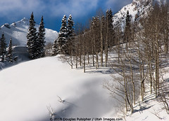 Wasatch Mountains in Winter (Utah Images - Douglas Pulsipher) Tags: altaskiresort snow snowy snowcovered winter alpine wasatchmountains utah ut littlecottonwoodcanyon vacation vacationers holiday holidays traveldestination mt superiorpeak peaks mountainous pinetrees pines forest forested west western day daytime sunny