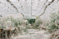 Abandoned Greenhouse [1] (jwbeatty) Tags: smc pa 50mm f14 abandoned building greenhouse illinois k5ii longgrove nursery pentax pentaxart photoaday project365 vsco