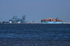 Maersk Edinburgh DST_1154 (larry_antwerp) Tags: maerskedinburgh maersk container rilland netherlands nederland zeeland schip ship vessel 船 船舶 אונייה जलयान 선박 کشتی سفينة schelde 斯海尔德河 スヘルデ川 스헬더 강 رود شلده سخيلده