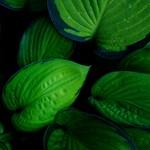 A New Leaf thumbnail