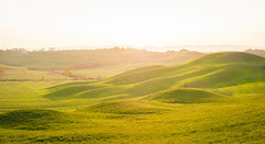 DSC_0074.jpg (saladino85) Tags: landscape sunset hilltop italy hills holiday tuscana blue tuscany scenery beautiful trees green rollinghills different corsano sunrise