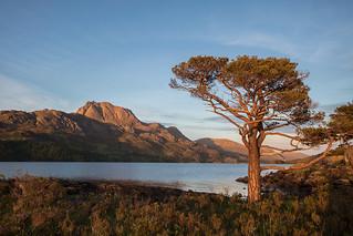 Highland Evening