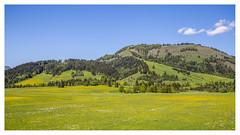 (Anscheinend) Tags: landscape paysage paesaggio paisaje natur nature green daytime sky blue österreich austria tirol tyrol hochfilzen alpen alps alpes alpi berge mountains montagne wiese grassland trees forest bäume wald wood panorama