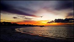 MORNING HAS BROKEN (photogtom43) Tags: morning sunrise standrewsstatepark floridastateparks panamacitybeach florida standrewsbay outdoors saltwater clouds sky beach dawn