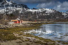 Spring (Sizun Eye) Tags: snow fjord huts seaweed mountains water lofoten norway sizuneye tamron2470mmf28 nikond750 d750 may spring
