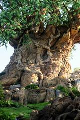 Disney World: Animal Kingdom - Tree of Life (wallyg) Tags: amusementpark animalkingdom baylake disneyworld florida orangecounty orlando themepark waltdisneyworldresort treeoflife tree discoveryisland