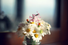 Home (Shahrazad_84) Tags: flowers indoor home daisies italy bokeh simplicity nature