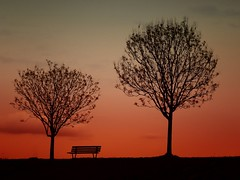 Trees to sunset (lucamarasca1) Tags: italy leicalens vlux leica nature horizon view day beautiful landacape background sky light red tree trees sunset