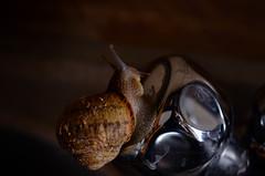 Peccatucci (encantadissima) Tags: lumaca rubinetto riflessi fotozzeggio