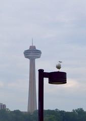 (andrealarocque) Tags: tower skylontower seagul niagarafalls