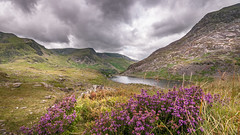 Every cloud has a silver lining_ (Einir Wyn Leigh) Tags: landscape mountains wales cymru heather foliage flowers beauty lake water clouds nature natural love