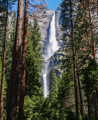 Yosemite Falls - Day 171 / 365 (Wayne~Chadwick) Tags: 2017californiatrip