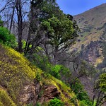 Wildflowers and Trees on the California Hillsides thumbnail
