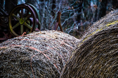 Misc. Outdoors-10.jpg (Drew Rampley) Tags: rough winter woods bale dark hay livestock pen sticks straw yellow