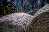 Misc. Outdoors-10.jpg (Drew Rampley) Tags: rough winter woods bale dark hay livestock pen sticks straw yellow