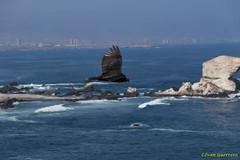 Antofagasta - Chile (Ivan Guerrero J.) Tags: antofagasta chile portada mineria tsunami desierto mar oceano pacifico surf