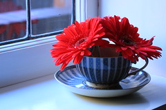 Make my day (alideniese) Tags: stilllife closeup flowers gerberas window windowsill cup saucer arrangement light colour bright red white blue 7dwf flora alideniese reflection bokeh