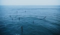 C a l i p s o  海 (garygaldamez) Tags: photography nature naturaleza 海 sea ocean 写真 自然 travel wanderlust 旅行