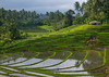 The terraced rice fields, Bali island, Jatiluwih, Indonesia (Eric Lafforgue) Tags: agricultural agriculture asia asian bali2019 balinese breathtaking countryside crops cultivated culture farming farmland fields green growing horizontal indonesia indonesian irrigation landscape lush nature nopeople outdoors paddies reflection ricefields ricepaddies riceterraces rural scenery scenic subak terracefarming terraced terraces terracing unescoworldheritagesite verdant village water jatiluwih baliisland