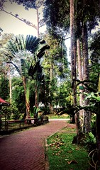 https://foursquare.com/v/taman-botani-negara-shah-alam/4de8f511d4c0faa5643bdd4a #holidays #travel #garden #green #nature #Asian #Malaysia #selangor #shahalam #度假 #旅行 #大自然 #绿色 #公园 #亚洲 #马来西亚 #雪兰莪 #沙阿南 #outdoor #外景