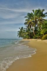 Isla Bastimentos (Travicted Photography) Tags: travel centralamerica centroamerica panama playa beach