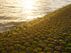 Buhnenküste (Jörg Paul Kaspari) Tags: baltrum sommer 2017 abendsonne buhne basalt basaltbuhne begrünt bewachsen algen grün green küstenschutz ebbe buhnenküste küste sonnenuntergang