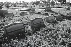 07022017_cemetery_01-2 (yosmama151) Tags: ppprettyonyx cemetery coast galveston galvestonisland gravemarker graveyard gulfcoast gulfofmexico headstone oleandercemetery texas tomb tombstones vacation blackandwhite bw monochrome
