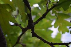 Bild #6 (J4yP) Tags: landscape nature natur landschaft nikon berlin germany deutschland macro makro makrofotografie photography