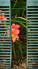 Shy flowers (6539) (cfalguiere) Tags: france exterieur datepub2017q307 flower outdoor plante fleur summer ladefense sel20170716 jardin garden bench banc