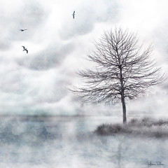 misty lake . . . (YvonneRaulston) Tags: surreal netartii awardtree soft texture australia nsw sony atmospheric moody fineartgrunge creativeartphotography blue photoshopartistry calm birds lake mist peaceful tree
