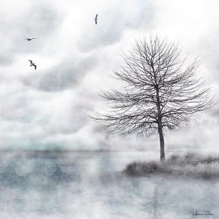 misty lake . . .