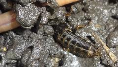 DSC03869a (alfredoeloisa) Tags: holometábolos metamorfosis animalia arthropoda insecta pterygota neoptera endopterygota