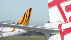 Tiger Mirage (Theen ...) Tags: black blue blurry lumix melbourne mirage red shimmery sky stripes tailfin theen tigerairlines tullamarine virginaustralia white yellow airplanes