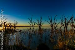 IMG_5393 (biglaptogs) Tags: barmera lakebonney riverland sa states
