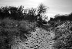 Weg in den Dünen / Path in the dunes (Lichtabfall) Tags: beach strand sand path pfad silhouette einfarbig landscape blackwhite blackandwhite landschaft monochrome schwarzweiss ostsee ostseeinsel inselpoel poel dünen dunes küste coast timmendorf timmendorfstrand mecklenburgvorpommern