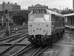 London Kings Cross Station 31st December 1975 (loose_grip_99) Tags: london kings cross station england uk railway railroad rail train blackwhite noiretblanc diesel engine locomotive ecml class31 31408 1975 brush type2