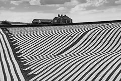 They Farm Zebras Here (Geoff France) Tags: stripes agriculture farmland landscape mono monochrome blackandwhite