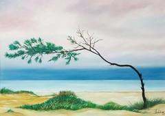 Le Bombarde. Riviera del Corallo (cicipeis) Tags: cicipeisart paintingofsardinia alghero sardegnaquasiuncontinente sardegna lebombarde rivieradelcorallo