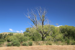 Kakahu Escarpment (ambodavenz) Tags: kakahu escarpment scenic reserve nature landscape south canterbury new zealand sky skyline