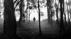 Foreboding (Chas56) Tags: monochrome forest fog trees person threat threatening eerie figure mysteryfigure mystery bw blackand white blackandwhite canon canon5dmkiii scarey hill landscape moment silhouette shapes ncg ngc light dark foreboding