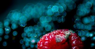 Poisonous - Beware of Mycotoxin - Macro Mondays
