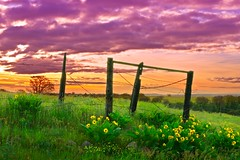 Fence and Sunrise 1156 D (jim.choate59) Tags: hff fence sunrise thedalles oregon wascocounty jchoate scenic landscape spring flowers balsamroot columbiarivergorge rural clouds green on1pics d610