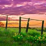 Fence and Sunrise 1156 D thumbnail