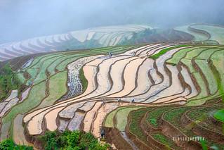 _U1H1436 Lao Chai, Mu Cang Chai, Yen Bai 0617